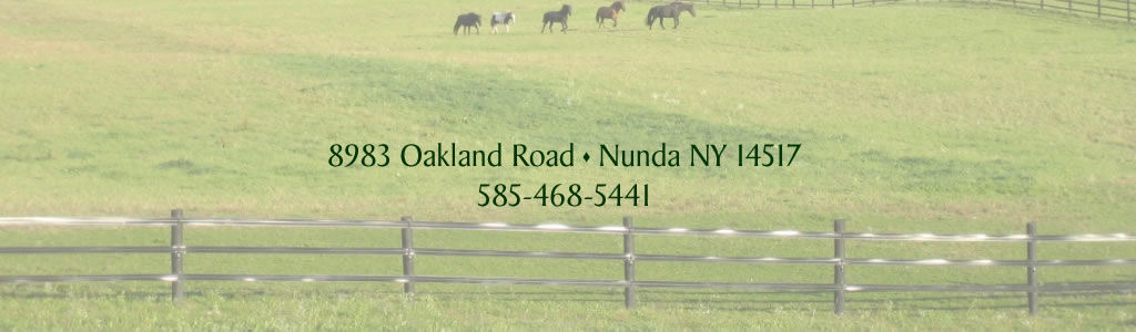 Welcome to our website. We not only have a lovely Bed & Breakfast in an idyllic country setting, but we are also a sophisticated equine facility that hosts equine events. Situated in beautiful Western New York, we have 88 acres of woods, rolling pastures, and spectacular views. Be sure to check out the pictures of our farm by clicking the Flikr button, follow us on Facebook, and we hope you decide to spend a night in our B&B, attend one of our events, or let us host your equine event!